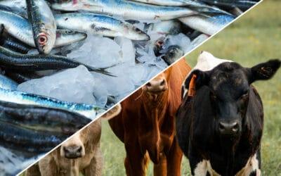 Choisir entre le Collagène marin ou bovin ?